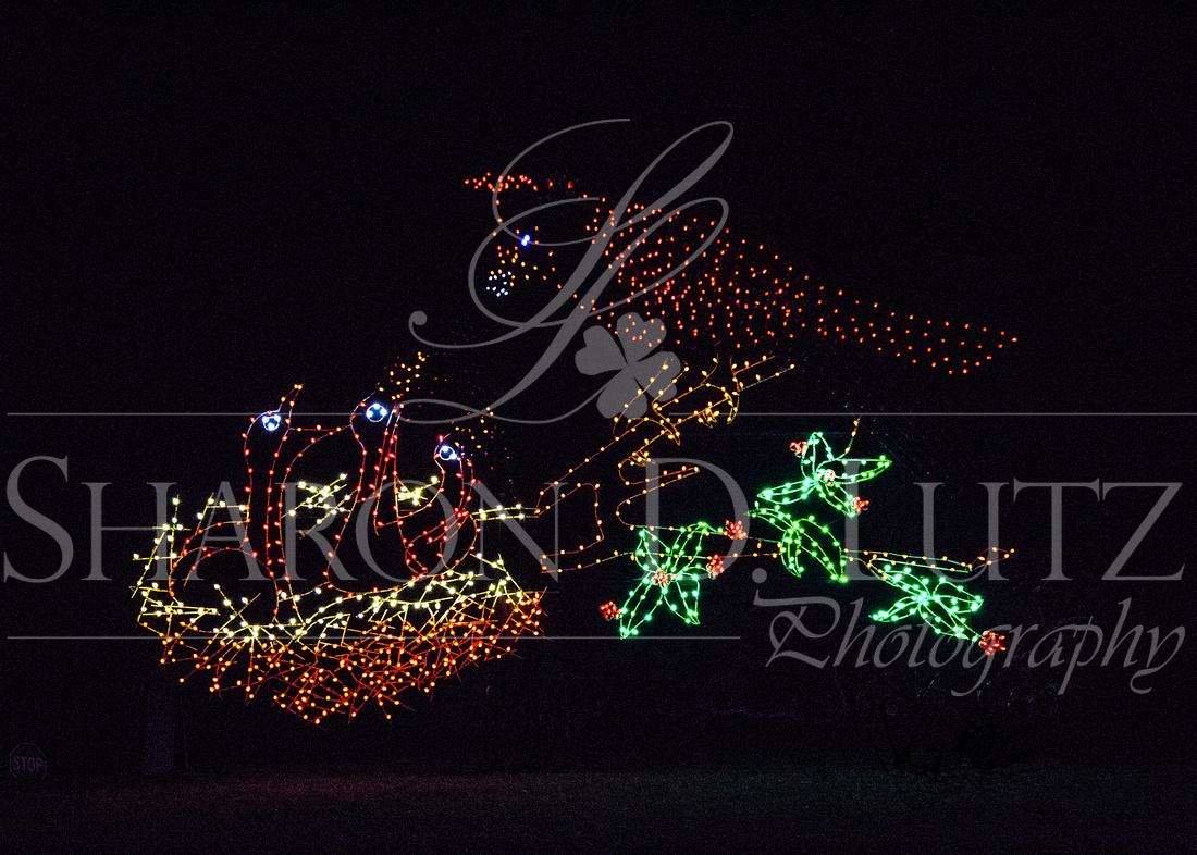 Sharon D. Lutz Photography | Oglebay - Festival of Lights